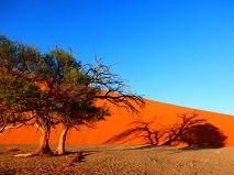 5-127 Namib Desert.JPG